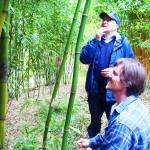 Pokud obdivujete bambusy – navštivte Bambusárium